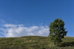 Ensamt träd på en solig dag arkivbild