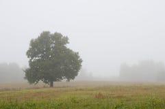 Ensamt träd på ett dimmigt fält arkivbilder