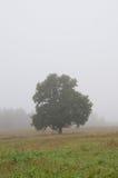 Ensamt träd på ett dimmigt fält royaltyfria foton