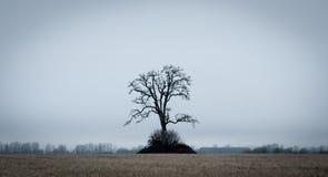 Ensamt träd på ett fält Royaltyfria Bilder