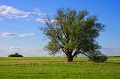 Ensamt träd på ett fält i vår Arkivbild