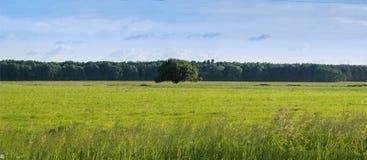 Ensamt träd på ett grönt ljust fält arkivbild