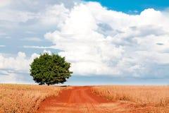 Ensamt träd på fält under blå himmel och olika moln Royaltyfria Bilder