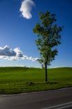 Ensamt träd på grönt fält och blå himmel Arkivbilder