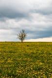 Ensamt träd på gul prärie 1 Fotografering för Bildbyråer