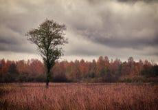 Ensamt träd på höstfält royaltyfria foton