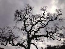Ensamt träd på kall dag Arkivfoton