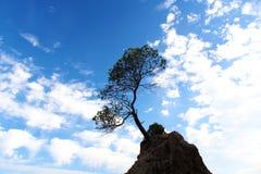 Ensamt träd på klippan med blå himmel Arkivfoto