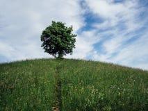Ensamt träd på kullen Royaltyfri Fotografi