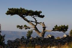Ensamt träd på kusten Royaltyfria Foton