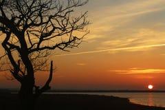 Ensamt träd på kusten på en solnedgång, när solen på horisonten Arkivfoto