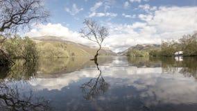 Ensamt träd på Llanberis, Snowdonia nationalpark - Wales, Förenade kungariket lager videofilmer