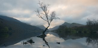 Ensamt träd på Llyn Padarn royaltyfria foton
