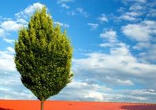 Ensamt träd på molnig himmel Fotografering för Bildbyråer