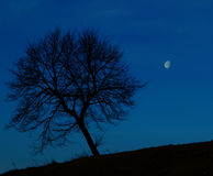 Ensamt träd på natten Royaltyfri Fotografi