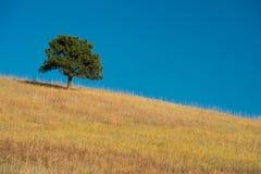 Ensamt träd på prärie royaltyfri fotografi