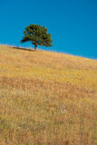 Ensamt träd på prärie royaltyfria bilder