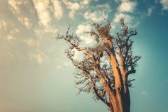 Ensamt träd på ren bakgrund för blå himmel Royaltyfria Foton