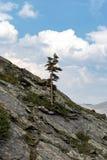 Ensamt träd på sida av berget arkivfoton