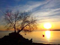 Ensamt träd på sjöGenève Arkivbilder
