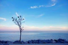 Ensamt träd på sjösidan Arkivfoton
