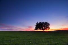 Ensamt träd på skymning Arkivfoton