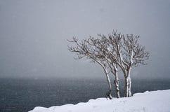 Ensamt träd på snöhäftiga snöstormen Royaltyfri Fotografi
