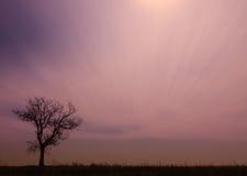 Ensamt träd på solnedgången Arkivfoton