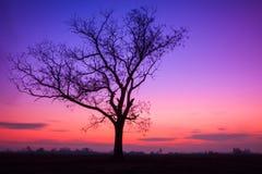 Ensamt träd på solnedgången Royaltyfri Fotografi