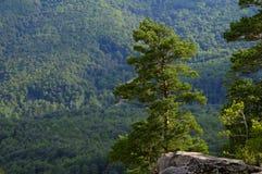 Ensamt träd på vagga Arkivbild