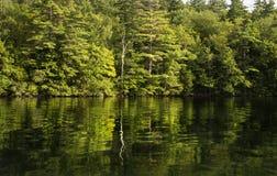 Ensamt träd reflekterat i vatten av sjön Arkivbilder