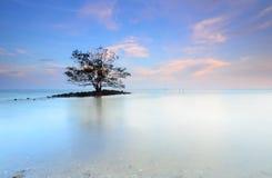 Ensamt träd som växer högert i mitt av en sjö på skymning med ett b Royaltyfri Bild