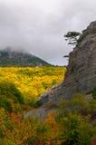 Ensamt träd som växer på kanten av berget arkivbild