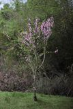 Ensamt träd, trevlig färg fotografering för bildbyråer