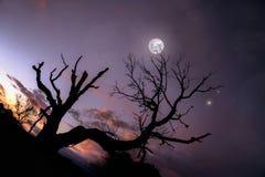 Ensamt träd under blå natthimmel med månen och stjärnor Royaltyfri Foto