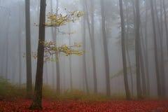 Ensamt träd under en dimmig höstdag i skogen Royaltyfri Fotografi