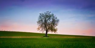 ensamt träd under himlen Fotografering för Bildbyråer