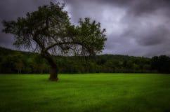 Ensamt träd under lynnig himmel arkivbild