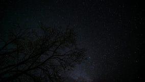 Ensamt träd under stjärnklar himmel 4K TimeLapse stock video