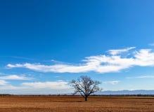 Ensamt träd utan sidor i mitt av fältet royaltyfri foto