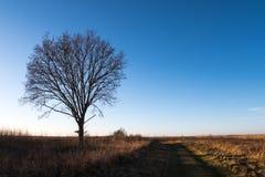 Ensamt träd vid en landsvägren Arkivbild