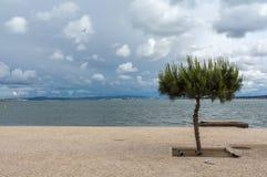 Ensamt träd vid havet i Portugal arkivfoto
