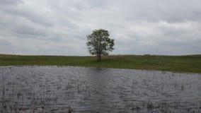 Ensamt träd vid sjön i molnigt väder stock video