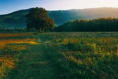 Ensamt tr?d i den Cades lilla viken fotografering för bildbyråer