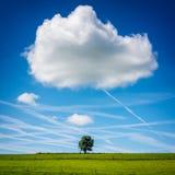 Ensamt träd i fält med det stora molnet över Royaltyfria Bilder