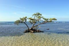 Ensamt träd i grunt salt vatten Arkivbilder