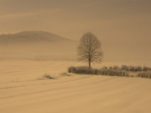 Ensamt träd i snödimma Arkivfoto