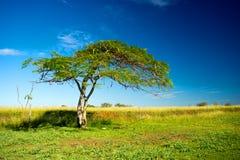 Ensamt träd på en jordbruksmark Royaltyfri Foto