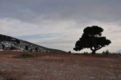 Ensamt träd under molnig vinterhimmel Arkivbilder