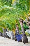 ensamt tropiskt för strand Royaltyfria Foton